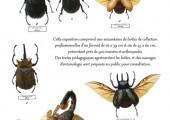 Fiche d'information Exposition Drôles de Bêtes